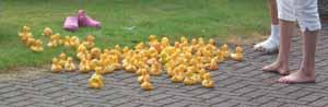 Ducks_exCIMG4049w300