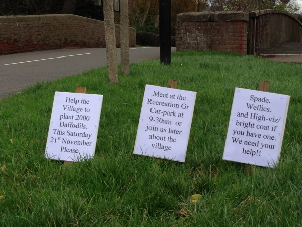 20151119 Daffodil-plant-notices_IMG_2130